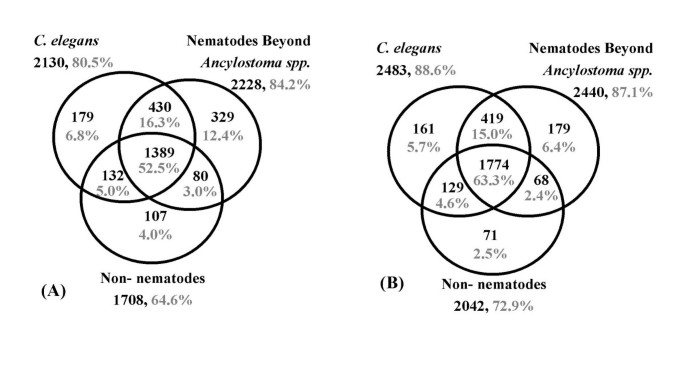 Investigating hookworm genomes by comparative analysis of