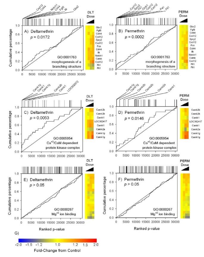 Transcriptional response of rat frontal cortex following