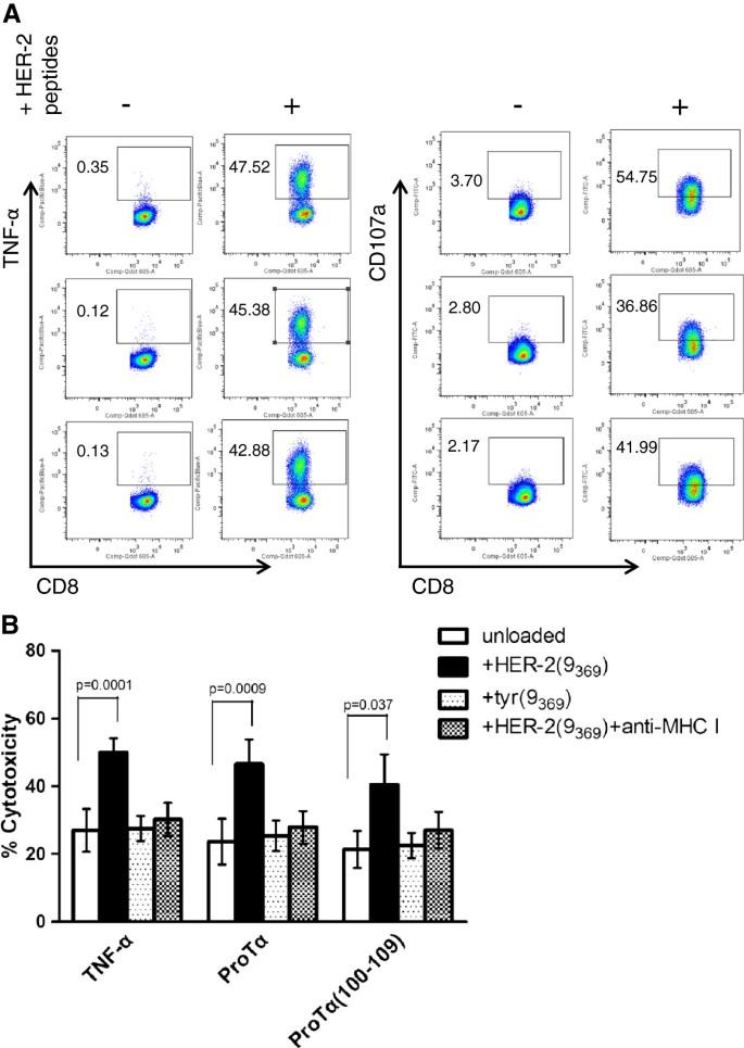Prothymosin α and a prothymosin α-derived peptide enhance
