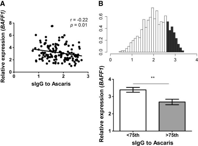 Ig g ascaris antigénekhez mit jelent az aceton szaga a szájból?