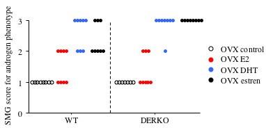 Estren promotes androgen phenotypes in primary lymphoid