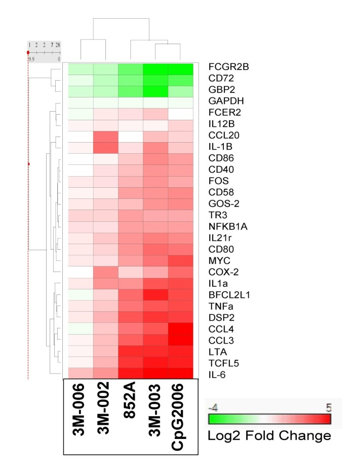 Comparison of human B cell activation by TLR7 and TLR9 agonists