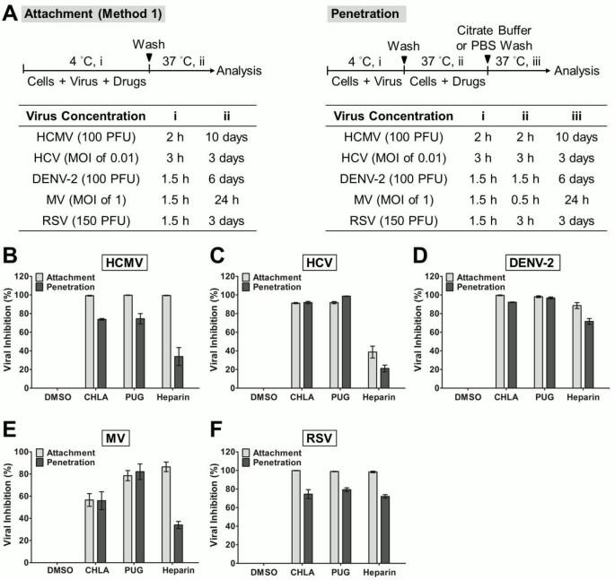 Broad-spectrum antiviral activity of chebulagic acid and