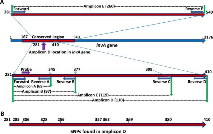 Development of a sensitive and specific qPCR assay in