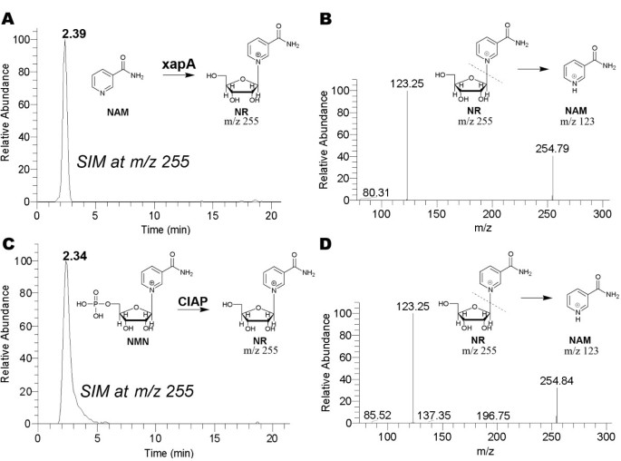 New function for Escherichia coli xanthosine phophorylase