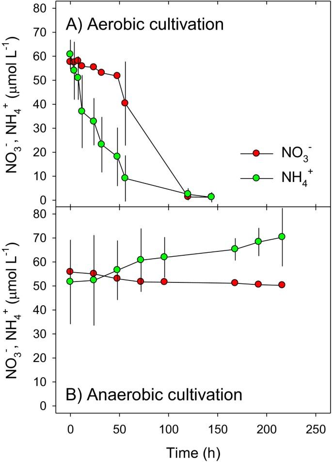 Dissimilatory nitrate reduction by Aspergillus terreus