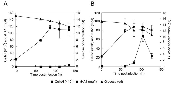 Expression of hemagglutinin protein from the avian influenza