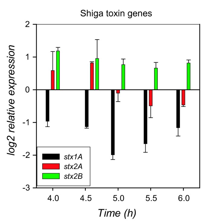 Global transcriptional response of Escherichia coli O157:H7 to