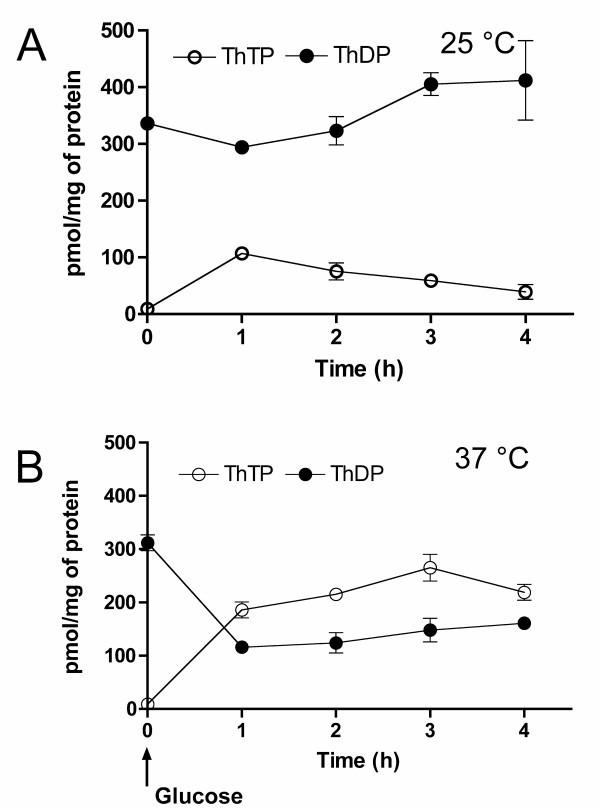 Adenylate kinase-independent thiamine triphosphate