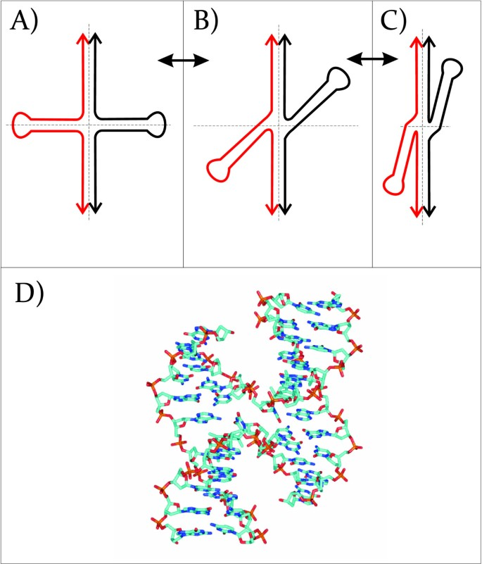 Cruciform structures are a common DNA feature important for