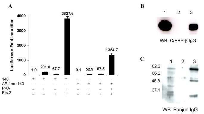 Ets-2 and C/EBP-beta are important mediators of ovine