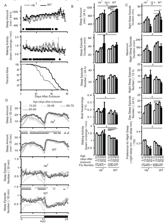 Sleep, aging, and lifespan in Drosophila | BMC Neuroscience