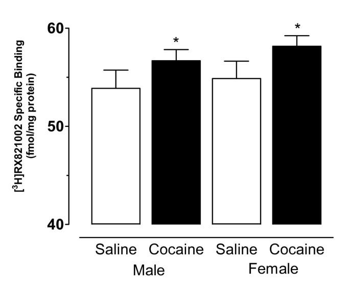 Prenatal cocaine exposure alters alpha2 receptor expression