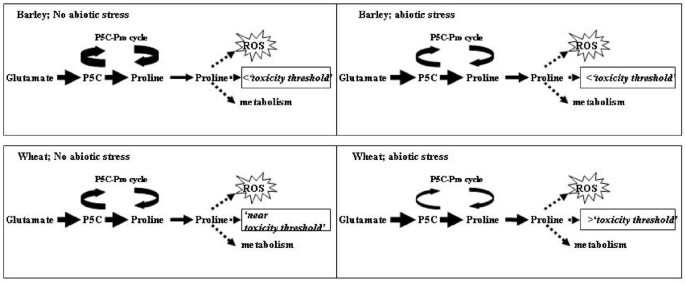 The development and evaluation of single cell suspension from wheat