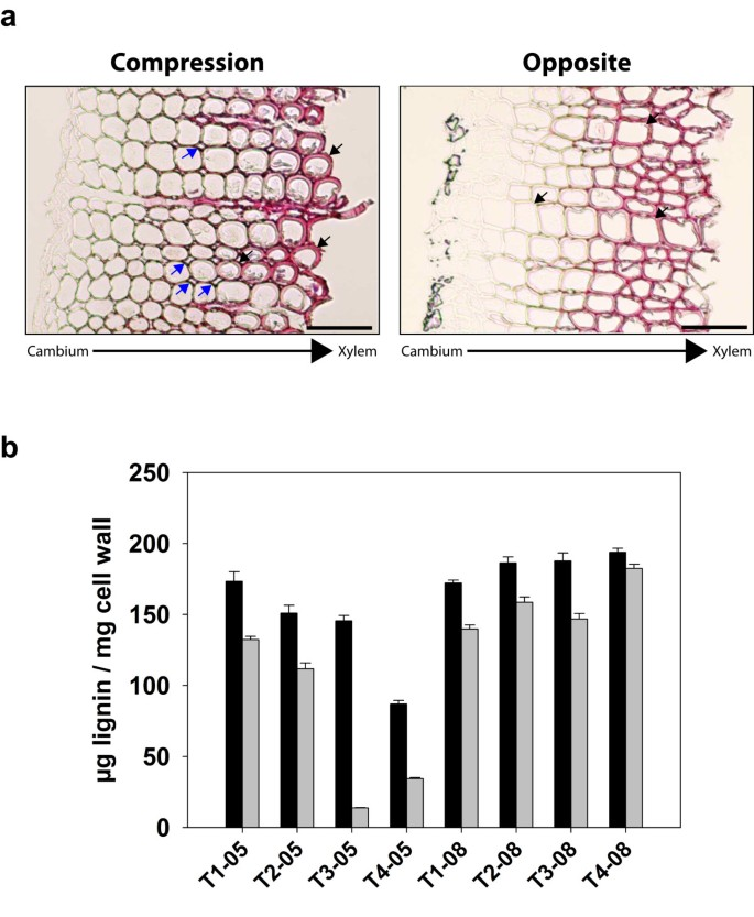Reprogramming of gene expression during compression wood formation