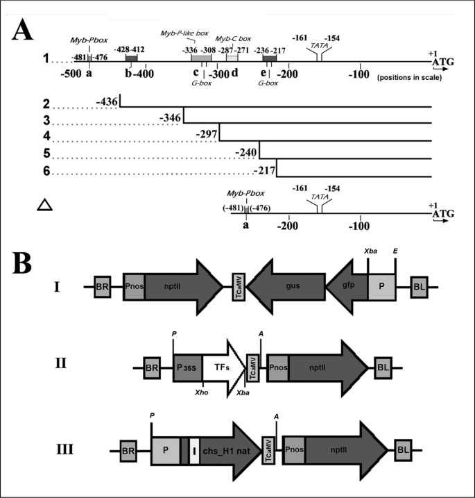 Combinatorial analysis of lupulin gland transcription factors from