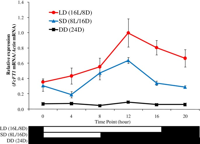 Expression of FcFT1 , a FLOWERING LOCUS T- like gene, is regulated ...