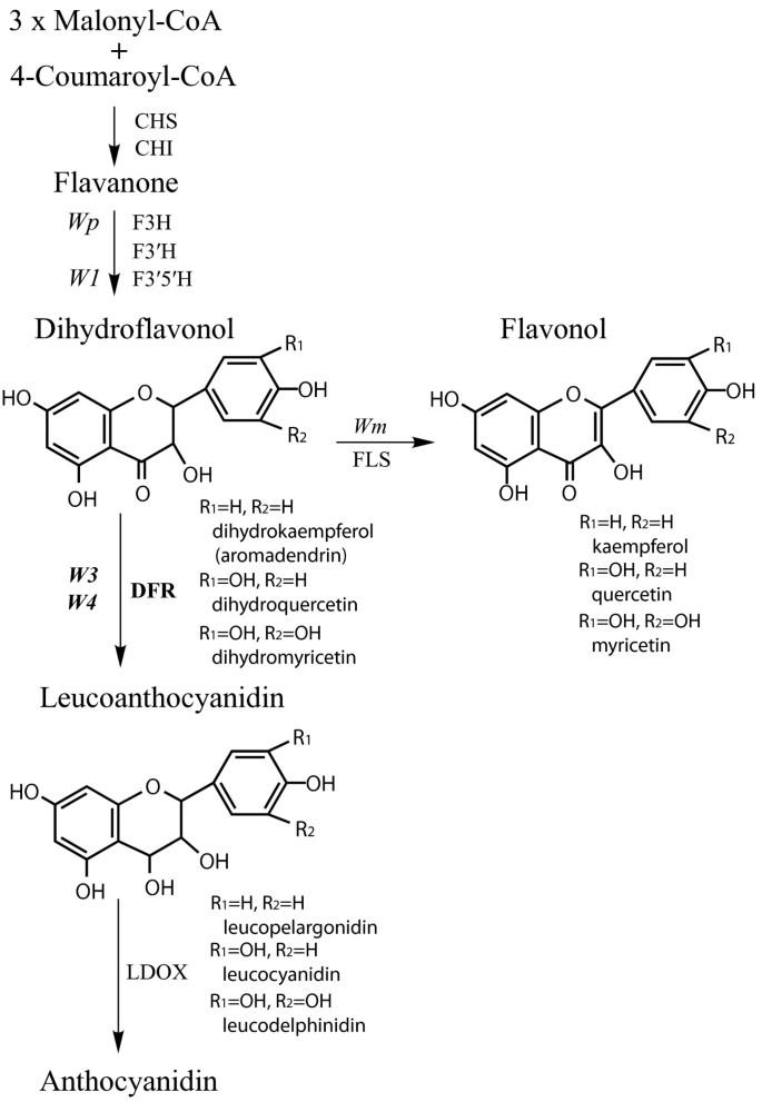 Allelic variation of soybean flower color gene W4 encoding