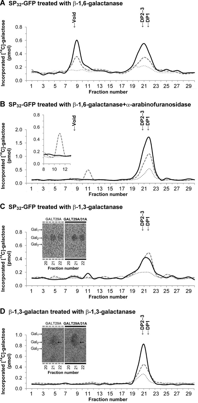 Galactosyltransferases from Arabidopsis thaliana in the