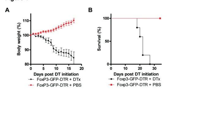Deletion of Foxp3 + regulatory T cells in genetically