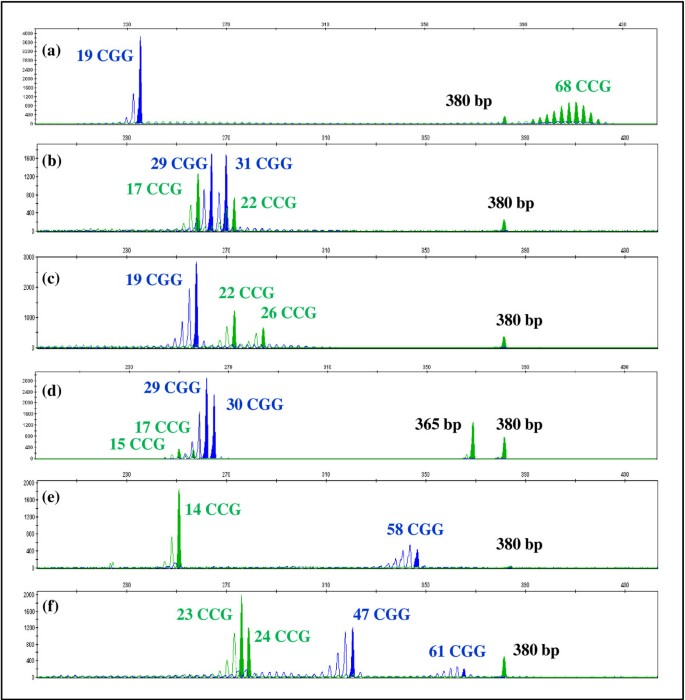 Development and validation of a multiplex-PCR assay for X
