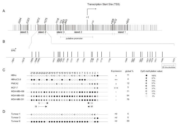 Simultaneous CXCL12 and ESR1 CpG island hypermethylation