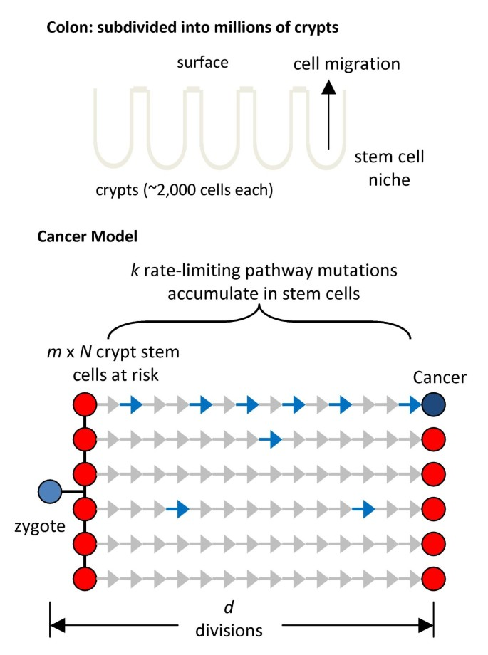 A simple algebraic cancer equation: calculating how cancers