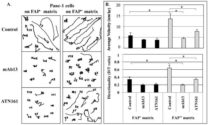FAP-overexpressing fibroblasts produce an extracellular