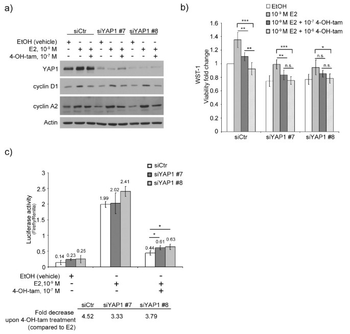 Decreased expression of Yes-associated protein is associated with ...
