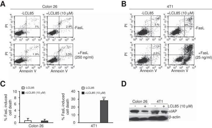 Ceramide targets xIAP and cIAP1 to sensitize metastatic colon and