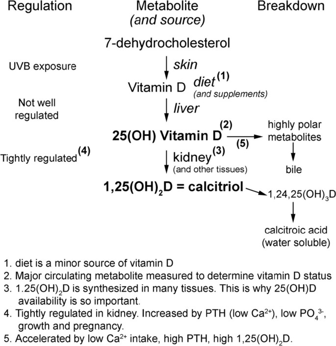 Adjuvant therapy with high dose vitamin D following primary