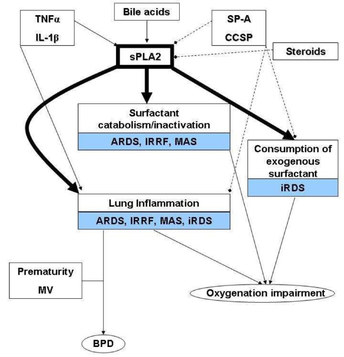 Secretory phospholipase A2 pathway in various types of lung