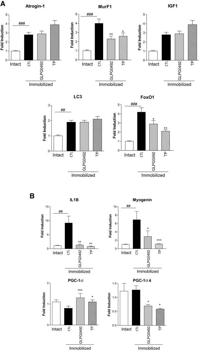 Characterization of GLPG0492, a selective androgen receptor