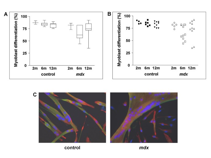 Analyses of the differentiation potential of satellite cells from