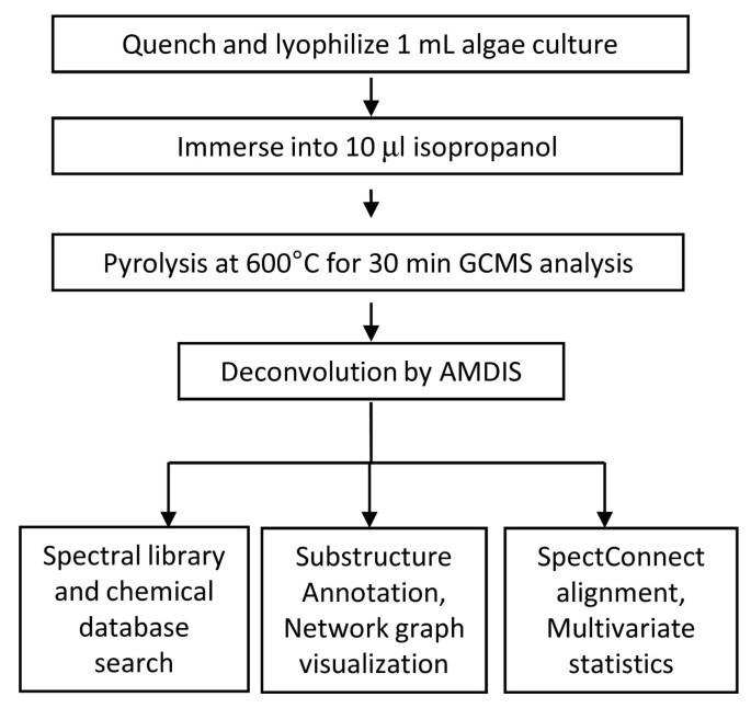 Hydrocarbon phenotyping of algal species using pyrolysis-gas