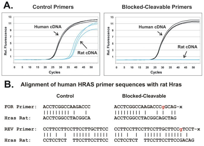 RNase H-dependent PCR (rhPCR): improved specificity and