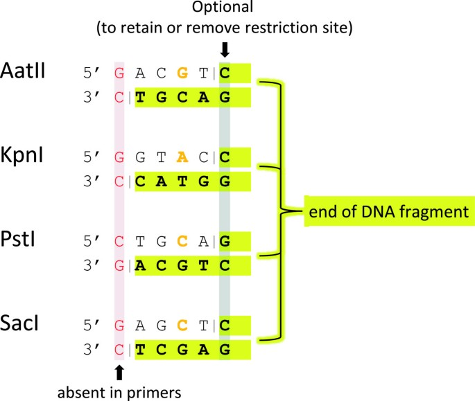 Directional cloning of DNA fragments using deoxyinosine