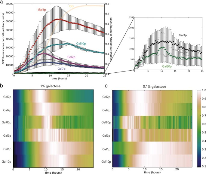 Unmixing of fluorescence spectra to resolve quantitative time-series