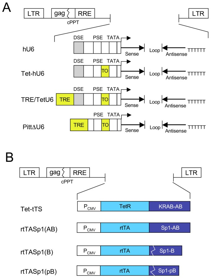 Lentiviral vectors encoding tetracycline-dependent