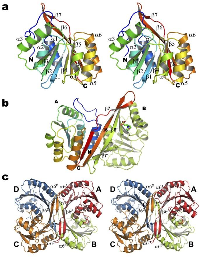 Crystal structure of putative CbiT from Methanocaldococcus