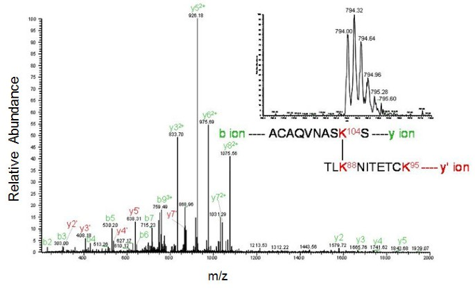 Crosslinking and mass spectrometry suggest that the isolated NTD