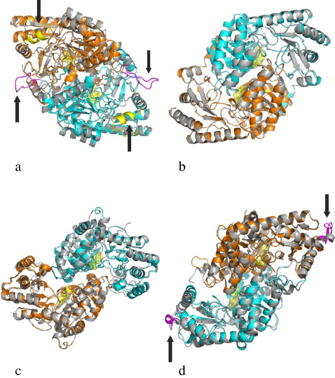 Type I pyridoxal 5′-phosphate dependent enzymatic domains