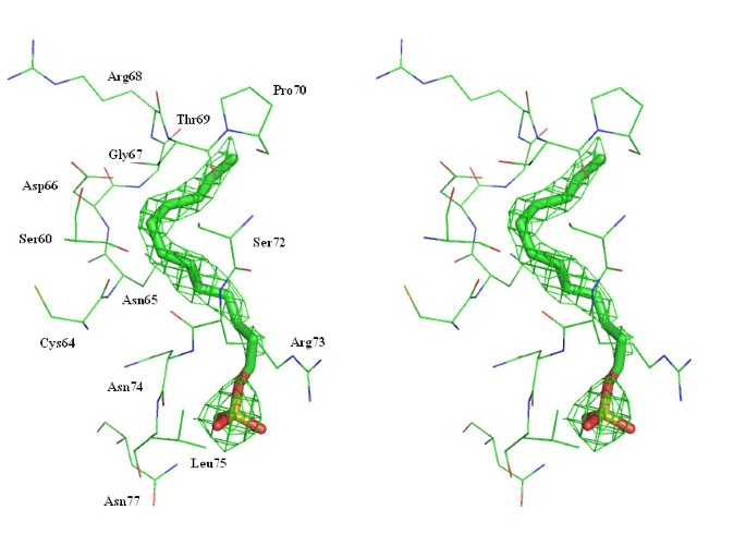 Protecting role of cosolvents in protein denaturation by SDS