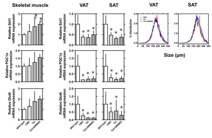 Telmisartan ameliorates insulin sensitivity by activating