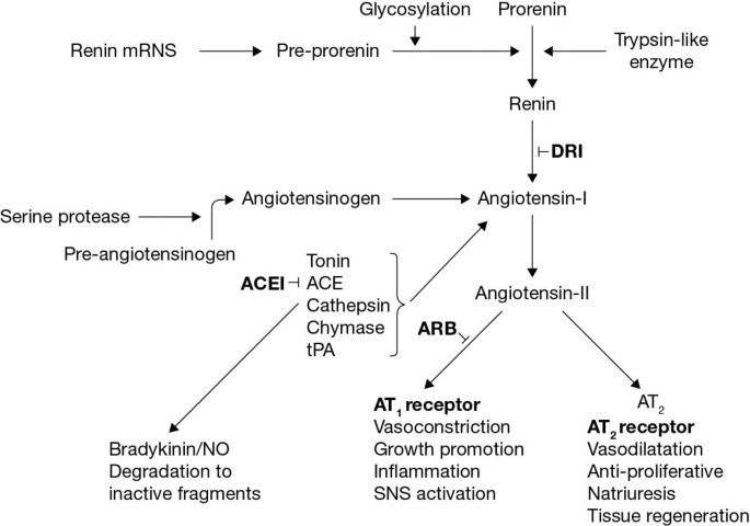 Dual renin-angiotensin system inhibition for prevention of