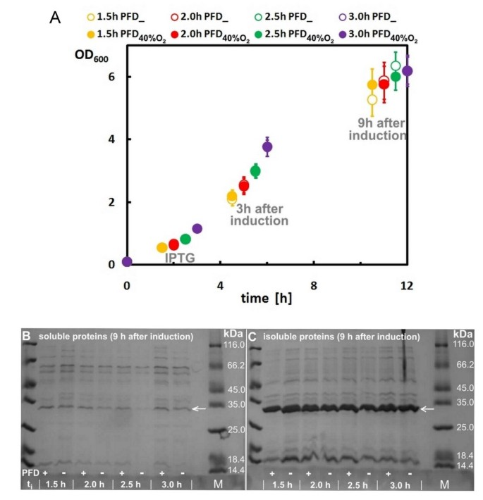 Enhanced growth and recombinant protein production of Escherichia