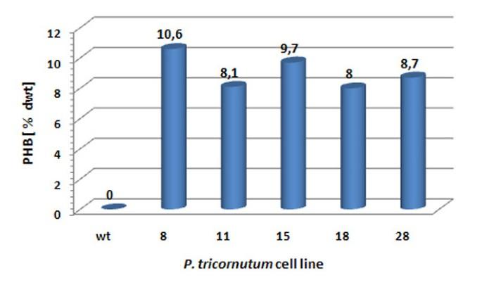 Microalgae as bioreactors for bioplastic production