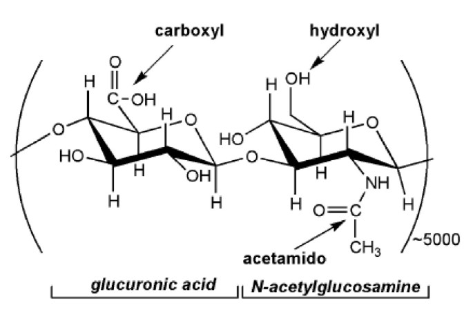 Microbial production of hyaluronic acid: current state