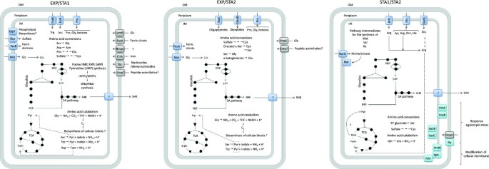 Global transcriptomic analysis of an engineered Escherichia