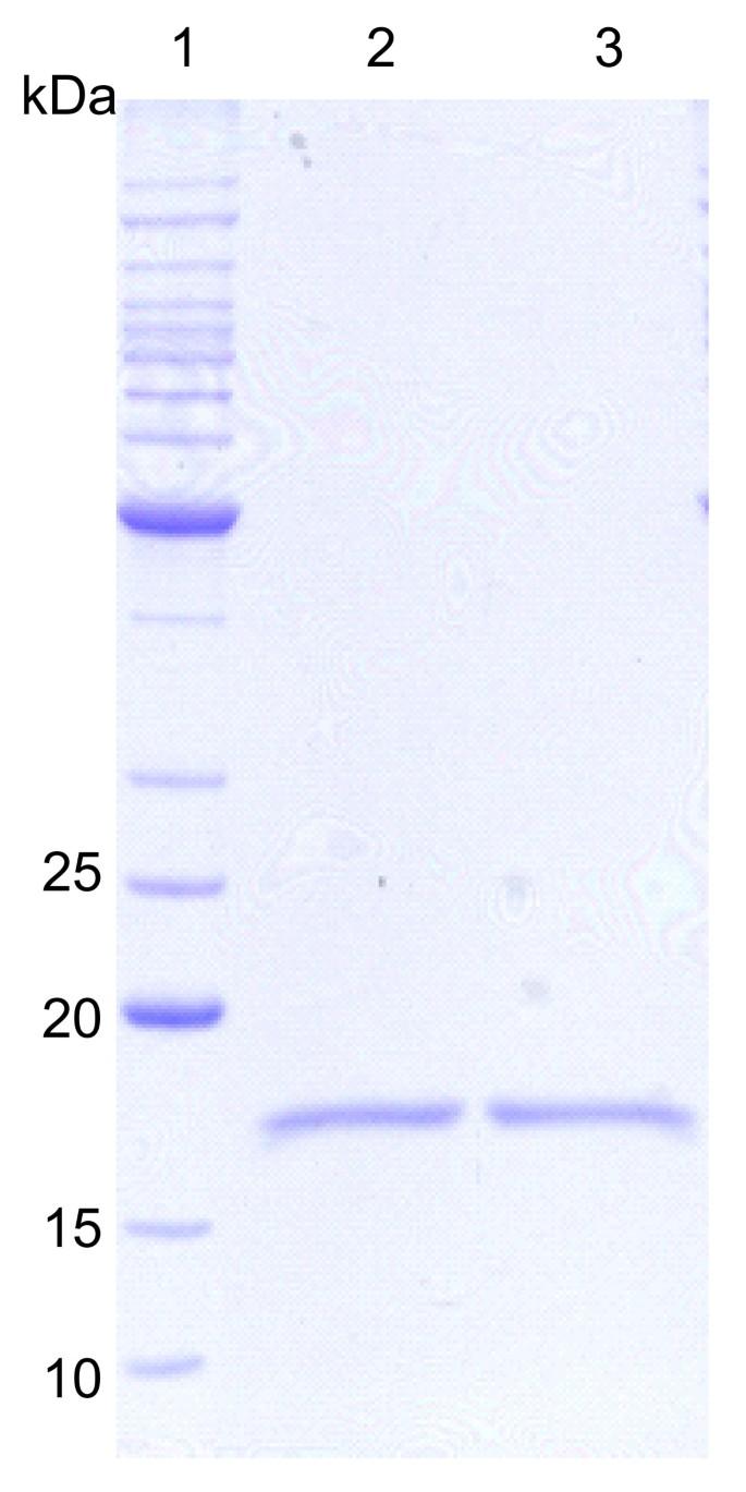 Human granulocyte colony stimulating factor (hG-CSF): cloning